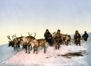 Reindeer pulling a sleigh in Arkhangelsk, Russia in 1890–1900